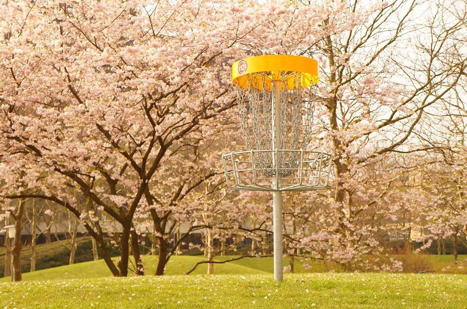 Discgolf-Korb in Baumblüten